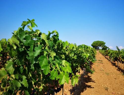 Voyage Presse sur les nouvelles variétés françaises naturellement adaptées au terroir de demain