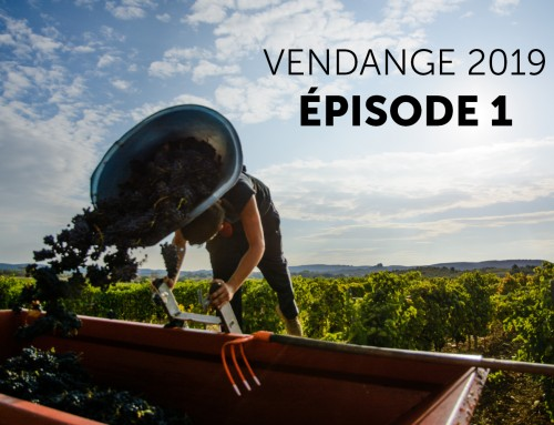 Vendanges 2019 : Episode 1 !